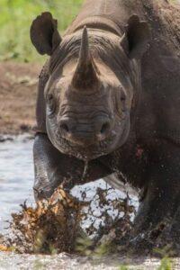 Rhinos: Killing & Corruption