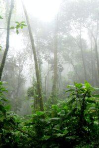Greenwashing global logging