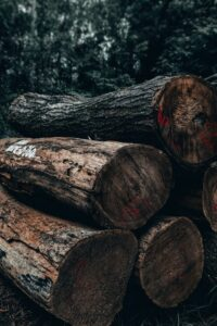 The Trees That Bleed: How rosewood is smuggled from Senegal into Gambia